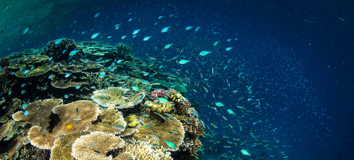 A close look at the Great Barrier Reef in Australia.