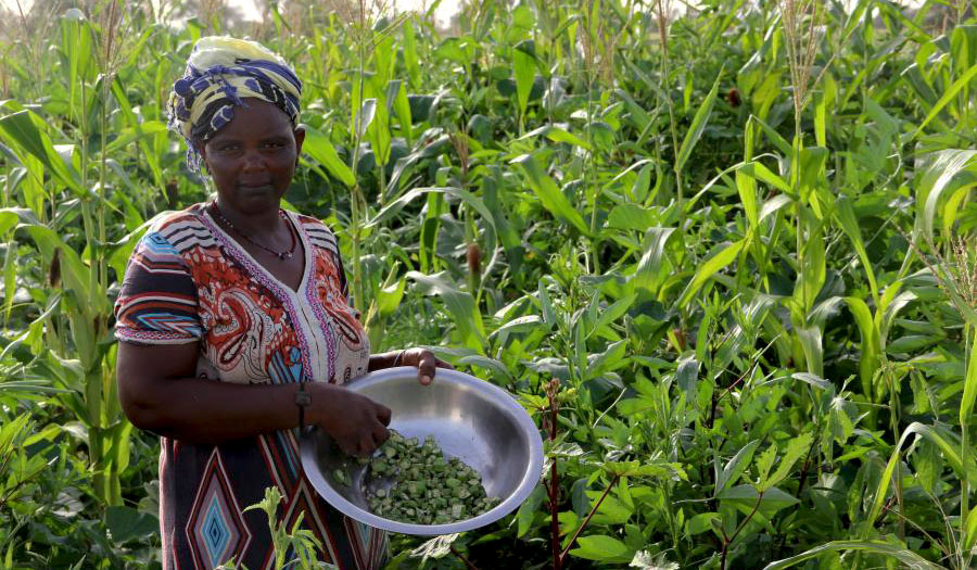 A woman holds a bowl of beans as she stands in the middle of a lush field of crops.