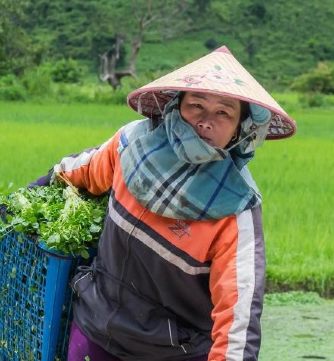 A female worker collecting agricultural produce  in Xieng Khouang Province, Lao PDR.
