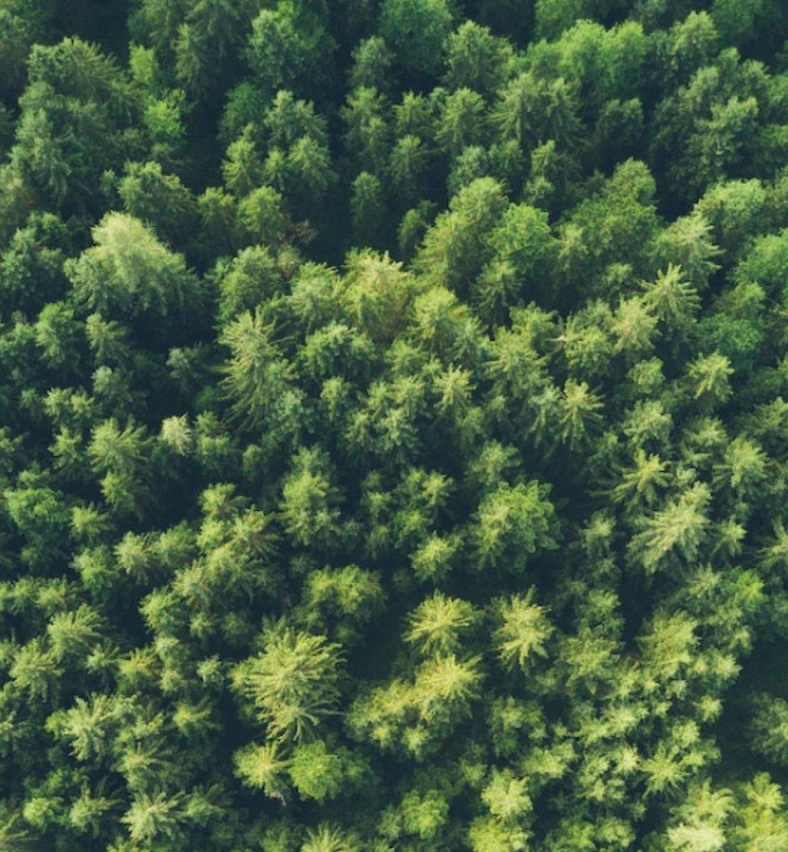 Aerial view of a lush green forest.