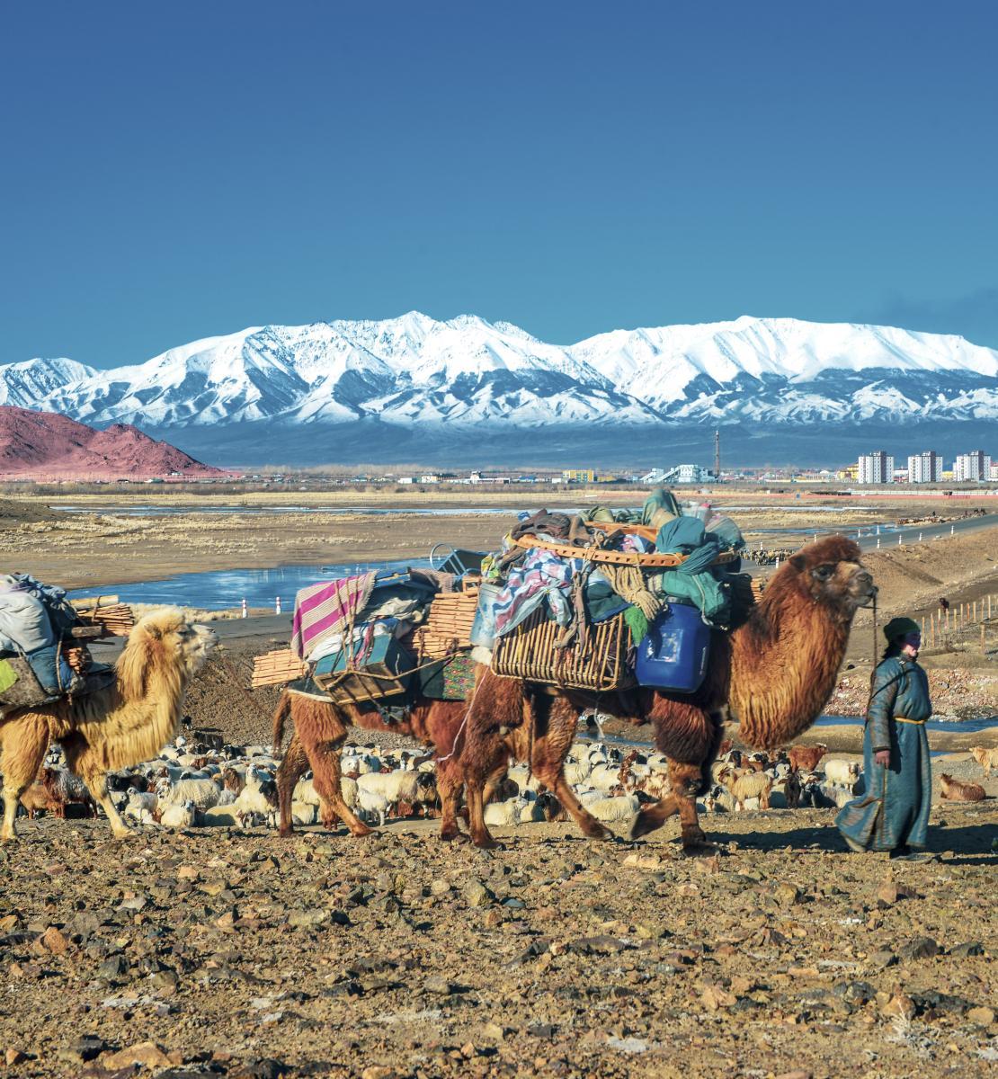 一个人带着几只携带物资的动物在山区附近行走。