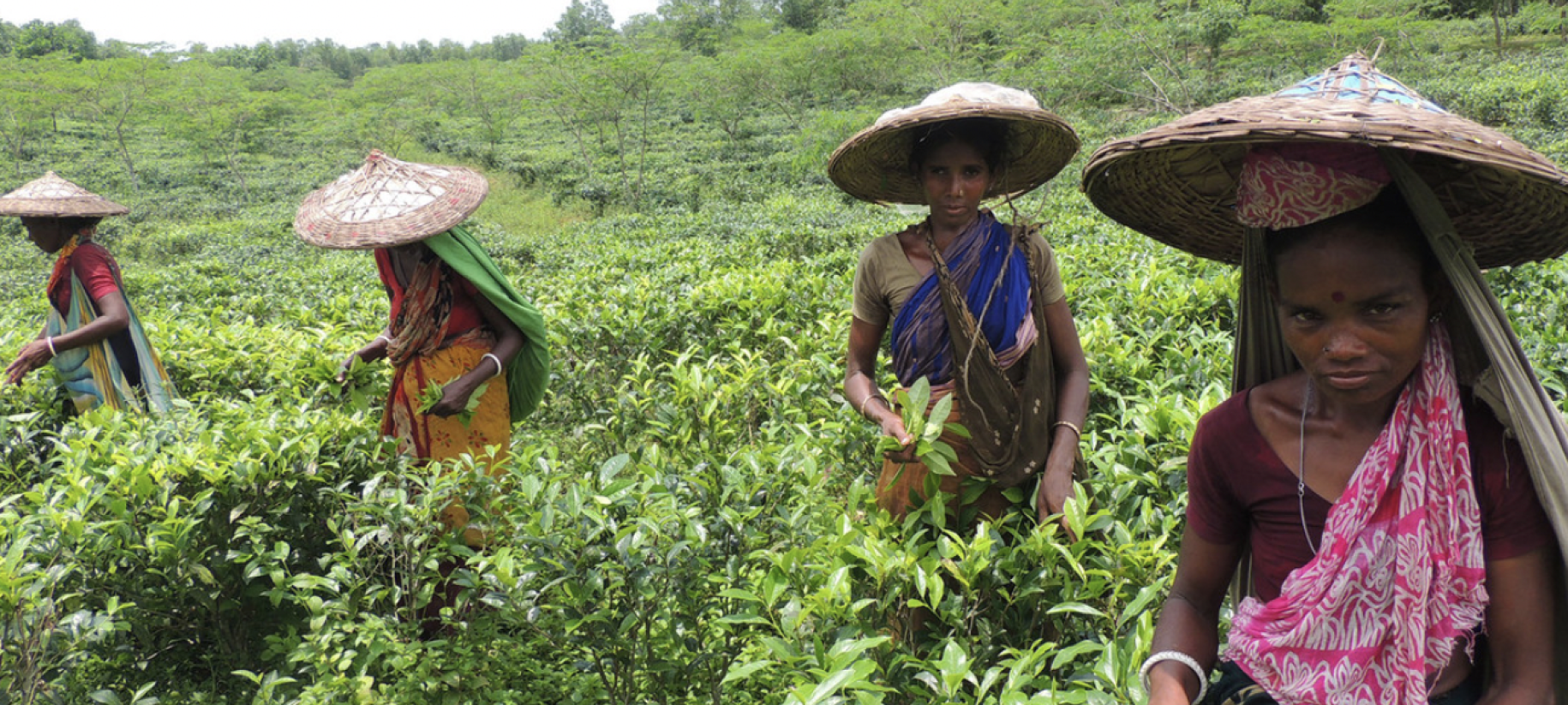 Four young women in bright colors and hats stand in a green tea field.